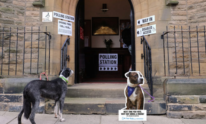 Pet Charity 'All Dogs Matter' Taps #DogsatPollingStations Trend to Encourage Adoption
